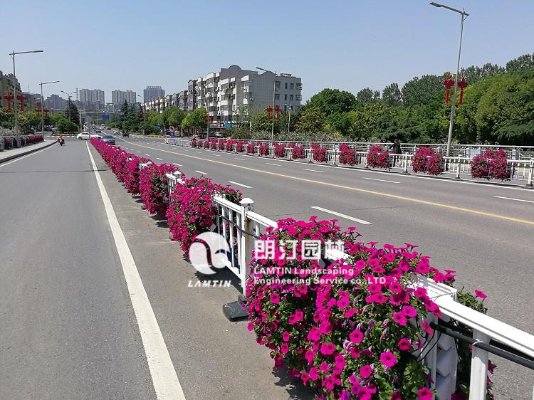 朗汀必威官网亚洲体育护栏绿化