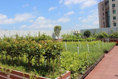 朗汀必威官网亚洲体育——屋顶绿化案例